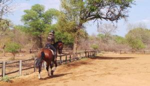 Gerti Dressur pferdesafari