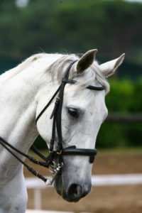 cavalli SS1_8090_resize
