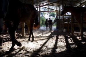 horses barn 3 motswiri
