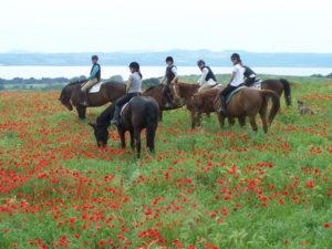 Ladies Horses Poppies 1